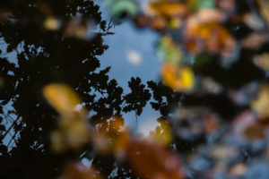53030854 - reflections of trees in a small puddle.